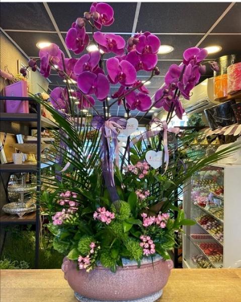 Orkide 05