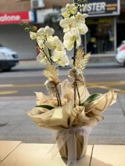 Orkide 12