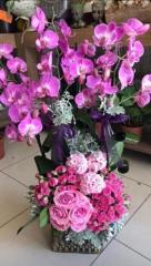 Orkide 09