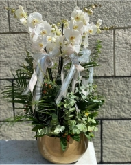 Orkide 04
